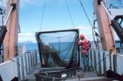 Preparing to deploy a multiple opening and closing net (MOCNESS) for studying plankton and small pelagic animals. Photo