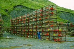 A large stack of commercial king crab pots observed at Kodiak. Image