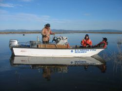Columbia River Estuary seine sampling for juvenile Chinook salmon for mark- recapture to evaluate residency time Photo