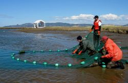 Seining for juvenile salmon for mark-recapture study at Russian Island Photo