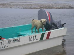 Captain Dog watches over his master's boat Photo