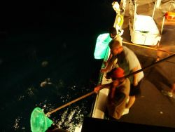 The time-honored scientific sampling method of dip-net collecting of the sea creatures attracted to the deck lights of the NOAA Ship DAVID STARR JORDA Photo