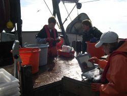 NOAA Fisheries employee's John Harms (left) and Stacey Miller with chartered vessel crewman Mike Retherford working up a sample obtained aboard the F/ Photo