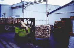 Operating a forklift to move processed fish. Photo