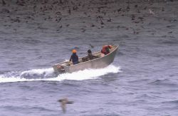 A muscular appearing dory with deep gunwhales and a high prow sets out from a commercial fishing vessel. Image