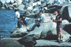 Angler fishing on breakwater. Image