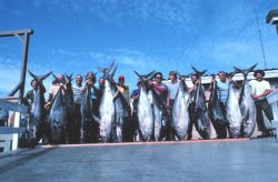 Group of anglers displaying yellowfin tuna catch after, dockside after long- range trip to Mexico. Photo
