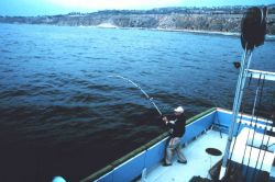 Angler fighting fish aboard charter (CPFV) vessel Photo