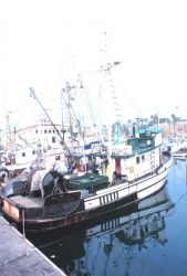 Part of the colorful fishing fleet at Santa Barbara Photo