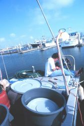 A fisherman working on his gear at the Channel Islands Harbor Image