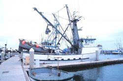 The Fishing Vessel CALOGERA A Photo