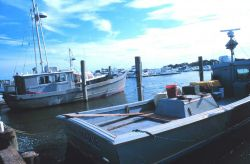 Multi-purpose fishing vessels tied up at Indian River. Photo