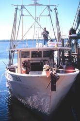 Small multi-purpose fishing boat at A Photo