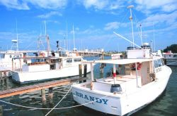 Shark, snapper, and grouper longliners, etc Photo