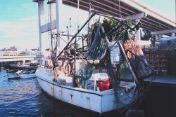 A shrimp trawler at Snug Harbor along the Caloosahatchee River Image