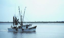 A shrimp boat approaching the Jekyll Island Municipal Pier Image