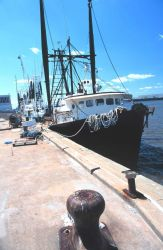A few of the Gulf of Mexico Croaker boats Image