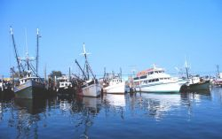 Commercial clam and recreational fishing boats on the Woodcliff Canal Photo