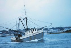 A shrimp boat in the harbor Image
