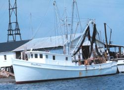 A shrimp boat at the pier Photo