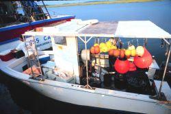 A shark fishing boat at Crosby's Fish & Shrimp Company pier Image