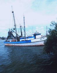 Shrimp boats in the Shrimp Basin Photo