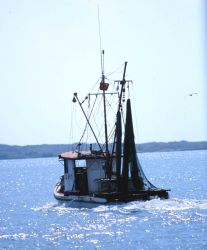 A shrimp boat heads out for the fishing grounds Image