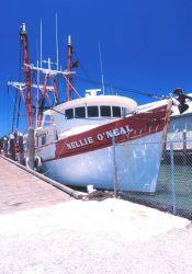 The O'Neil fleet of scallop dredgers Photo