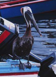 Closeup of a master fisherman Photo