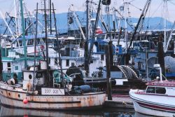 Fishing vessels at Squalicum Harbor Photo
