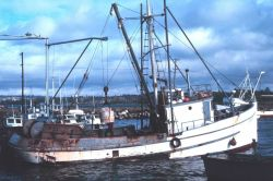 The fishing fleet at Blaine Photo