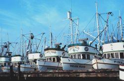 A fleet of company boats Image