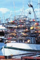Crab pots ready for deployment Photo