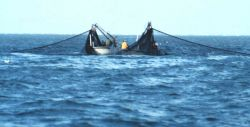 Purse seine boats setting nets to capture school of menhaden Photo