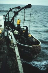 Menhaden fishing - port purse seiner boat being launched at daybreak Photo