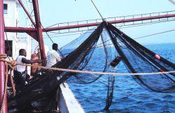 Preparing the net for a trawl run Photo