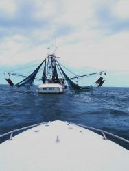 Nets and otterboards hanging outboard on the MISS EULA, a Vietnamese-American owned shrimp trawler operating in the Gulf of Mexico. Photo