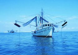 A double rigged shrimp trawler with nets and otterboards hanging outboard Image