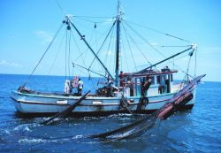 A double-rigged shrimp trawler with one net up and the other being brought aboard Image