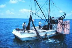 Double-rigged shrimp trawler dumping the catch from the bag of one net on deck Photo