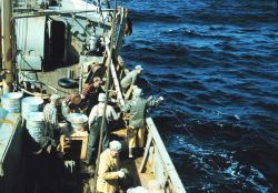 A tuna longlining operation Image