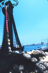 Mountains of nets, chain, and line - some of the working gear of commercial tuna boats Photo