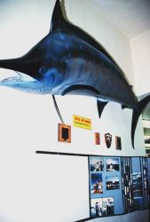 Fishing gear at the SOC Corporation Fishing Tackle Warehouse Photo