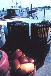 Floats, pots, and boats - commercial lobster boats operate out of Indian River Photo
