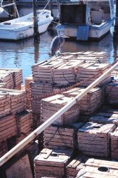 A heron takes a rest on a pile of stone crab traps Image
