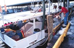 Shark-grouper-snapper longliner takes on bait mullet, ice, and supplies Photo