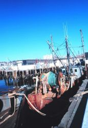 Groundfish trawlers tied up at the Portland Fish Exchange Photo