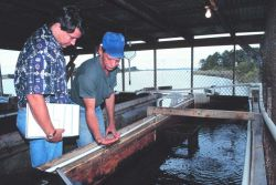 A Mississippi state biologist inspects bait holding tanks at a bait shop Image