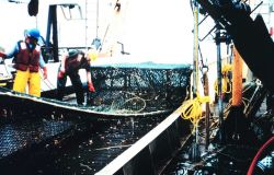 A large crab pot is brought back aboard. Image