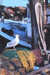 Fish nets, fishing boats, and the random sea gull Photo